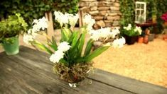 Planting Projects to Try This Winter | Indoor Design - | HGTV ~ Forcing Bulbs Indoors: Here are two easy ways to have flowers blooming indoors by forcing bulbs. Tags: Bulbs Gardening: http://www.hgtv.com/remodel/outdoors/planting-projects-to-try-this-winter-videos