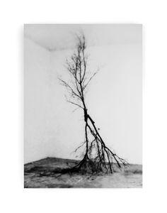 sandra meisel : kein ende, 2014 digitales fotogramm auf baryta paper, aufgezogen auf alu-diabond,  160 x 115 cm, ed 3 + 1 ap