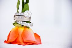 cool idea for a ring picture - I would set the rose sideways on a surface so more of the blossom was exposed
