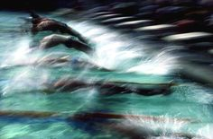 Ernst Haas. Swimmers, Olympics, Los Angeles, 1984