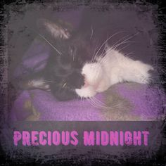 Love my #FurBaby. Having fun playing with a new app. Midnight is my test subject!