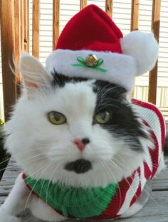 MEOWY CHRISTMAS For more fun holiday cats, visit https://www.facebook.com/funholidaycats