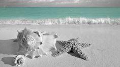 Sea shells & star