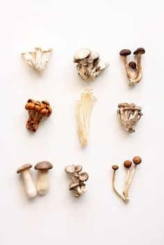 #mushrooms #foodphotography