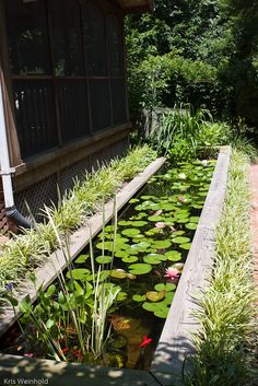 Small Water Gardens, Container Water Gardens, Back Gardens, Outdoor Gardens, Container Pond, Garden Pond Design, Garden Pool, Landscape Design, Garden Water