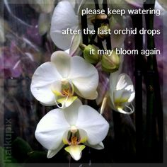 Found haiku: instructions that came with my orchid plant.