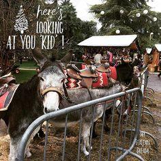 The Donkeys have come to town for Christmas ... #bethereorbesquare #mustgosee #beautiful #donkeys #christmasanimals #christmas #arcotrentino #asini #npire #italia #italy #traveltheworld #myitaliandream