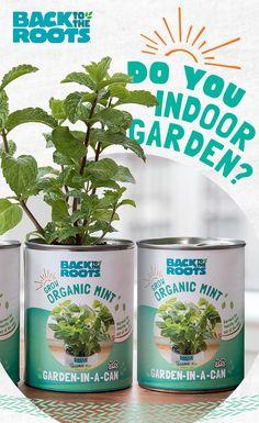 You don't need a whole backyard to start a garden. In fact, you can garden straight of a can! Starting A Garden, Grow Organic, Diy Garden Projects, Indoor Garden, Roots, Planter Pots, Gadgets, Backyard, Gardening