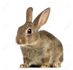 Pretty rabbit