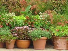 Flowering Plants for Pots thumbnail