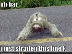 Funny Sloth Pictures with Captions | The Sloth who was a Perfectionist - Zak's Entertainment