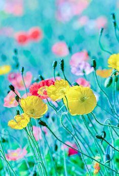 Z.  hhipiuhhuuuulooooooooooiokhcdXgxcfkhy ggh☑✅gaq☑❗oa.LLHF Flower