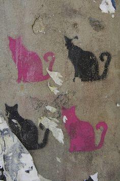 le chat en rose