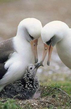 وللعائلة دفئ خاص ومميز Animals Beautiful Beautiful Birds Sea Birds