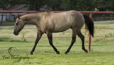 https://flic.kr/p/v1eeuu | Grulla Quarter Horse (Sage) | Trail Photography © 2015