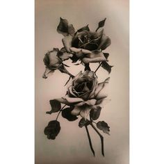 #myart #roses #blackwhite