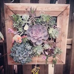 Succulent wall planter. @ SAILERSGREENHOUSE. COM