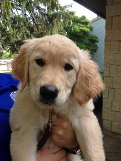 Martha Comfort Dog! #dogs #puppies #k9comfortdogs