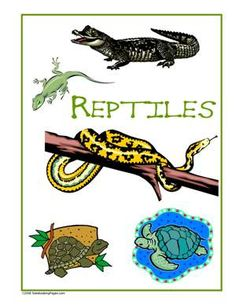 Sample Gallery - Nature Study Pages Kids Things To Do, Nature Study, Scouts, Gallery, Fictional Characters, Children's Books, Natural History, Boy Scouting, Fantasy Characters