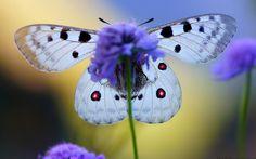 2560x1600 Beautiful butterfly