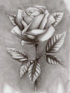 Schattendasein Rose