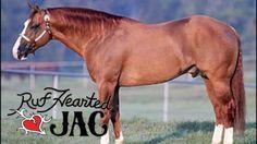 Ruf Hearted Jac a Stallion standing here at Tom McCutcheon Reining Horses #horses #Horse #HorseTraining #Reining #cutting #cowhorse #roping #HorseVideos #horsebarn #quarterhorses #NRHA #AQHA