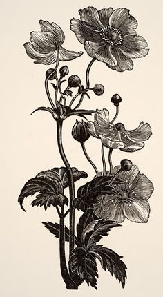 clare leighton woodcut anemone - Google Search