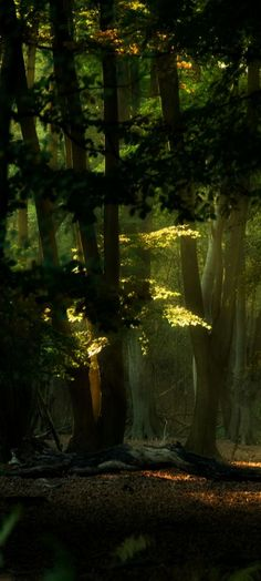 Light in the #forest: