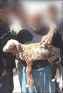 ISLAMIC: Allah's name appears as a birthmark on a lamb born in Palestine Miracles Of Islam, Allah Names, Palestine, Lamb, Newspaper Article, Islamic, Rid, Baby Lamb