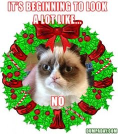 grumpy cat, its beginning to look a lot like christmas, angry cat, dumpaday