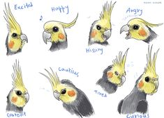 The expressions of a cockatiel