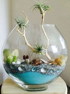 26 amazing diy mini terrarium garden projects and ideas 19 26 amazing diy mini terrarium garden projects and ideas 19 Mini Terrarium, Air Plant Terrarium, Garden Terrarium, Terrarium Wedding, Air Plant Display, Plant Decor, Air Plants, Indoor Plants, Sand Art