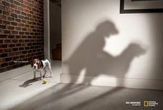 Campagne de publicité pour l'émission Dogs Whisperer de César Millan.