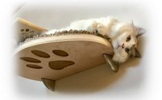 Purrfectly Catastic Creations offers unique collection of modern, hand-crafted cat shelves, cat trees, cat stairs, cat beds, catwalks and other cat furniture.