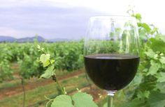 """Vinhos ecológicos: conheça os tipos sustentáveis da """"bebida dos deuses"""""""