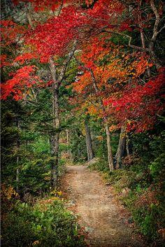 ✯ Acadia National Park - Maine
