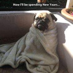 Funny pictures about Just Like This Pug. Oh, and cool pics about Just Like This Pug. Also, Just Like This Pug photos. Funny New Years Memes, New Year Jokes, Happy New Year Meme, Funny Memes, Hilarious, Funny Dogs, Funny Animals, Cute Animals, Funny Puppies