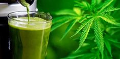 The Amazing Health Benefits of Juicing Raw Cannabis (Marijuana) Leaves