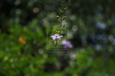 Back to Nature by auliasupport.deviantart.com on @DeviantArt