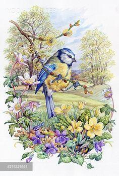 Blue tit with windflowers, violets, primroses - PortForLio - Stock photos, Illustrations & Video footage Art And Illustration, Vintage Birds, Vintage Art, Graffiti Kunst, Bird Coloring Pages, Bird Pictures, Wildlife Art, Bird Prints, Bird Art
