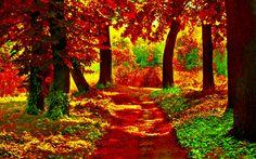 autumn-forest-path-235825.jpg (1920×1200)