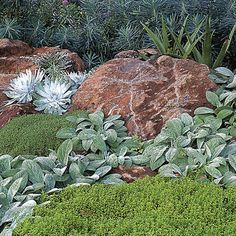 Play with textures For a pretty vignette near a patio, plant a soft stream of woolly lamb's ears (Stachys byzantina) so it appears to flow b...