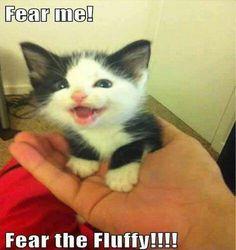 Fear the Fluffy!!!!