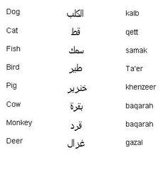 Arabic Words for Animals - Learn Arabic