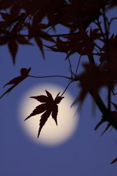 """Japanese poem by Lady Izumi Shikibu (978~unknown) """"Out of the darkness onto a darker path, / I now set out / Far-off moon on the mountain's rim, / shine on me."""" 暗きより 暗き道にぞ 入りぬべき 遥かに照らせ 山の端の月"""