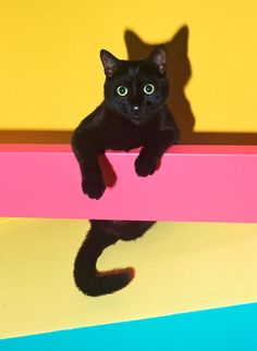 Beautiful Black CATS (ᵔᴥᵔ) Neon kitty