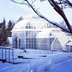 Ein sonniger Tag in Helsinki lädt zum Besuch im Botanischen Garten und seinen Gewächshäusern auch im Winter ein.  @tarjasblog.de und ich haben den verschneiten Park besucht der einst die Residenz des Finnischen Königs hätte werden sollen (link in Bio)  #Helsinki #VisitHelsinki #botanicalgarden #nature #Natur #garten #Garden #snow #schnee  #visitfinland