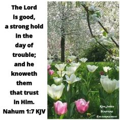 The Lord Is Good, King James Bible, Scripture Verses, Plants, Bible Verses, Plant, Bible Scripture Quotes, Bible Quotes