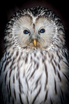 someone please explain to me how i can be terrified of birds, and obsessed with owls..
