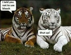 You never listen to me! 1st tiger: I told you not to use bleach. 2nd tiger: Shut up!
